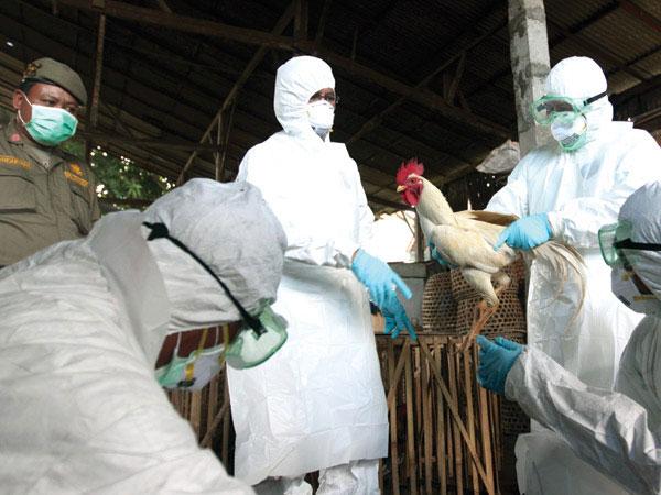 Alertă aviară: fermele de păsări din Tulcea, monitorizate de veterinari