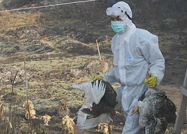 Cadou de Anul Nou: caz de gripă aviară, confirmat la Pardina