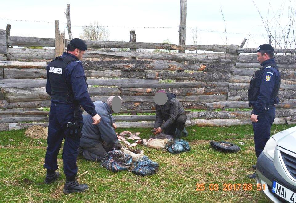 Braconieri opriţi cu focuri de armă de jandarmii tulceni