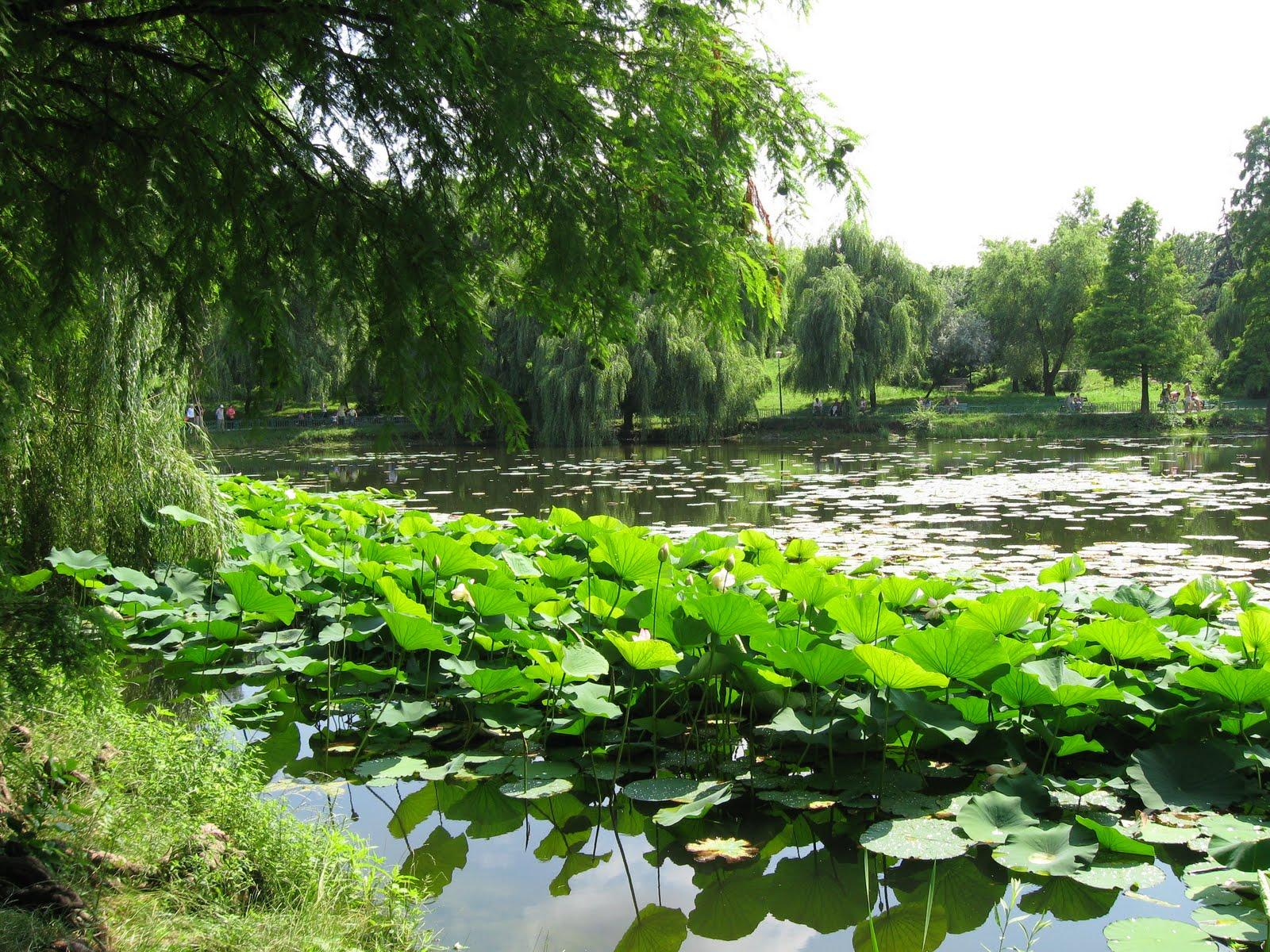 Peste 8.000 de specii, inventariate gratuit de 24 de cercetători români pentru Deltă