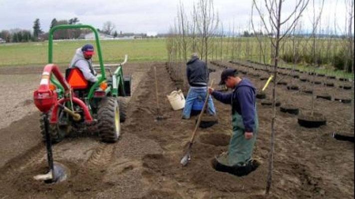Începe luna plantării arborilor