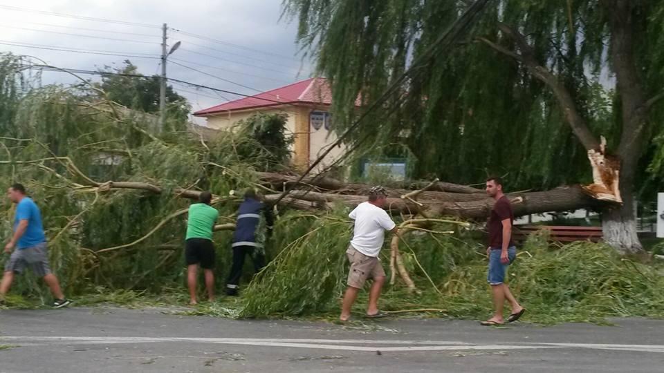 Vijelie la Luncaviţa: copaci doborâţi, un stâlp de telefonie, pus la pământ!