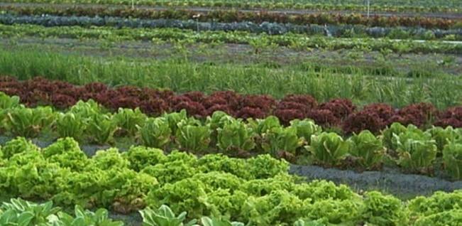 Licitaţie pentru agricultură ecologică în Deltă