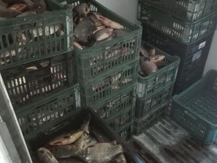 Peste 5 tone de peşte, confiscate de poliţiştii tulceni