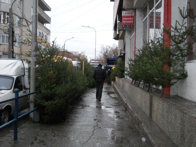 Pieţele din municipiu au autorizaţie pentru comercializarea brazilor de Crăciun