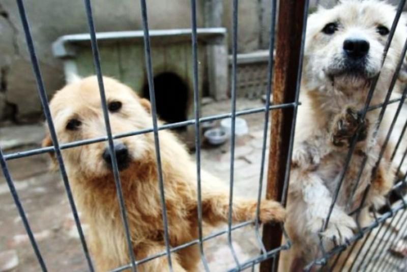 Târgul de adopţii câini se deschide la Tulcea