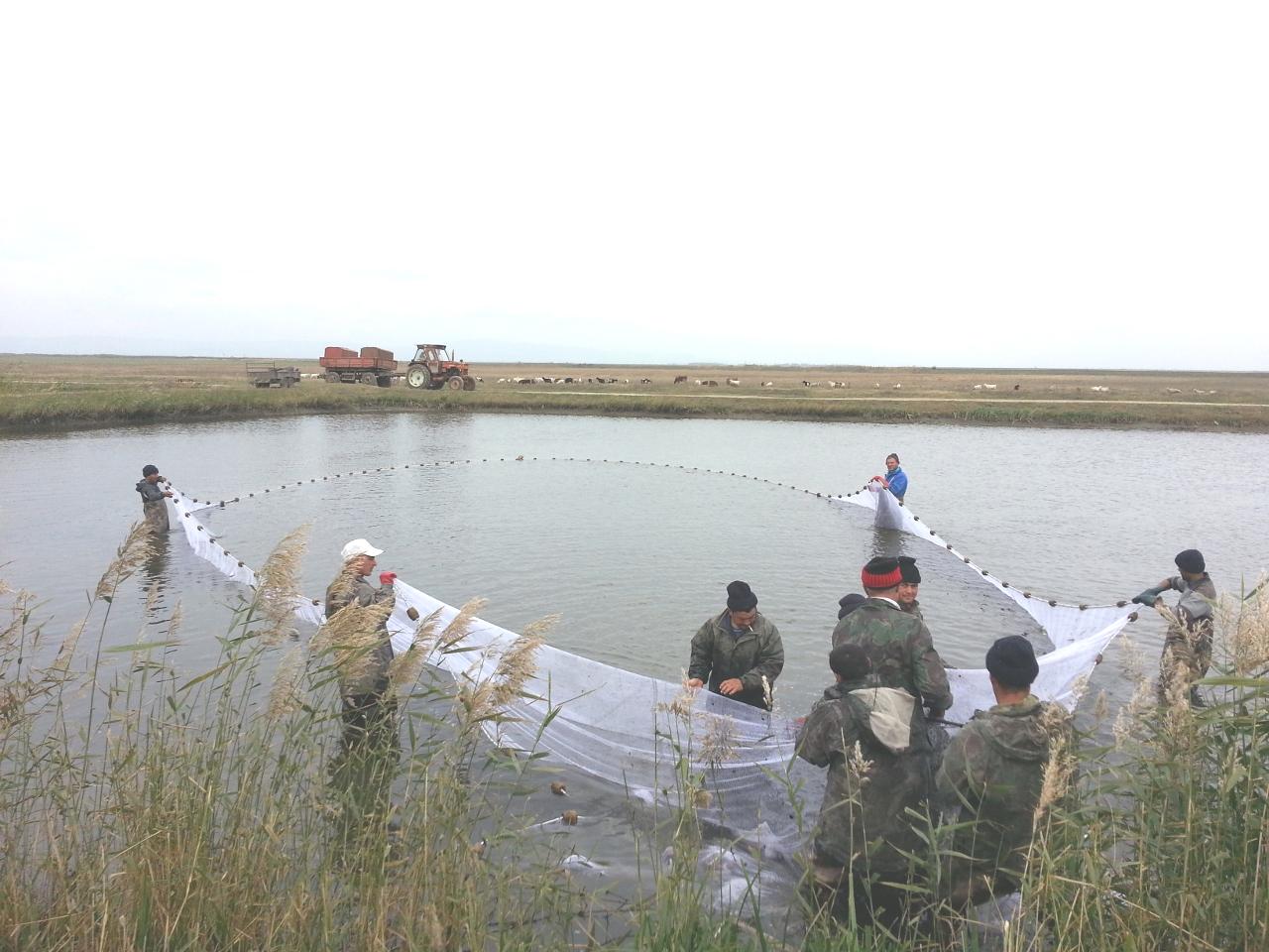Guvernatorul RBDD, Mălin Muşetescu: Delta Dunării este în pragul falimentului piscicol