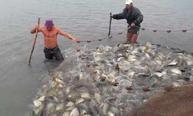 Liber la pescuit la setcă pe tot anul! Guvernatorul Muşetescu anunţă o explozie a braconajului în Delta Dunării