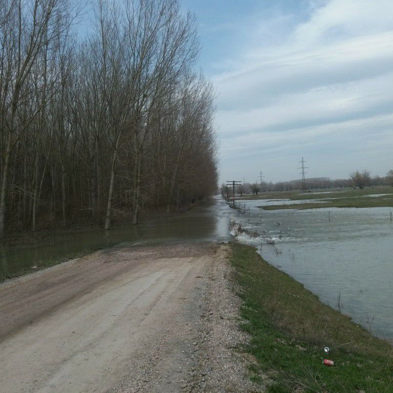 Creşterea cotelor Dunării: drum închis, întârzieri de nave şi edili nemulţumiţi