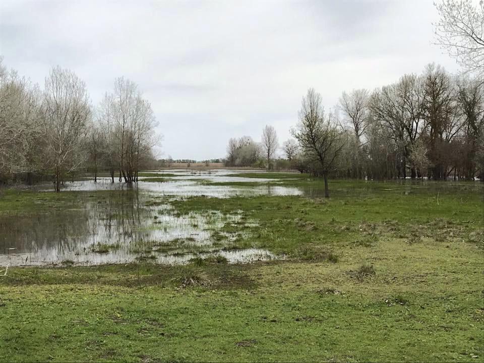 Se umflă Dunărea: circa 30 de gospodării din Crişan, inundate