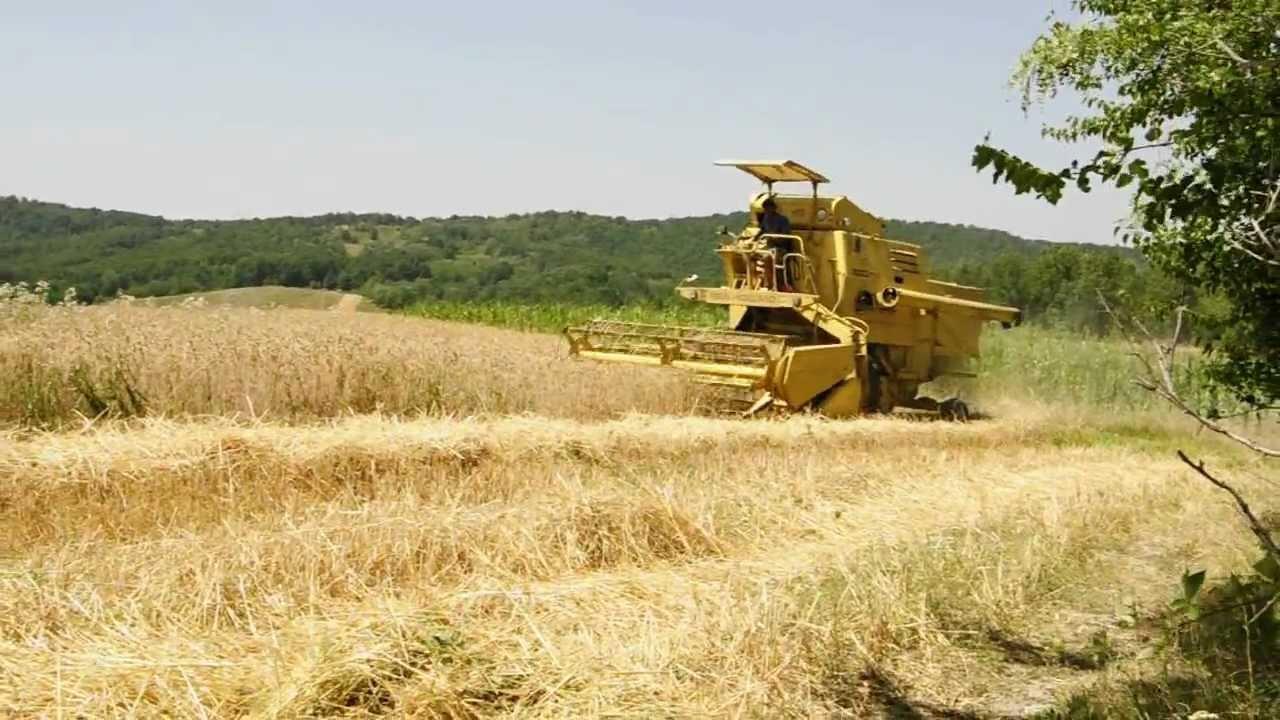 """An record pentru grâu în judeţul Tulcea: """"Este cea mai mare producţie la hectar din 1990 încoace"""""""
