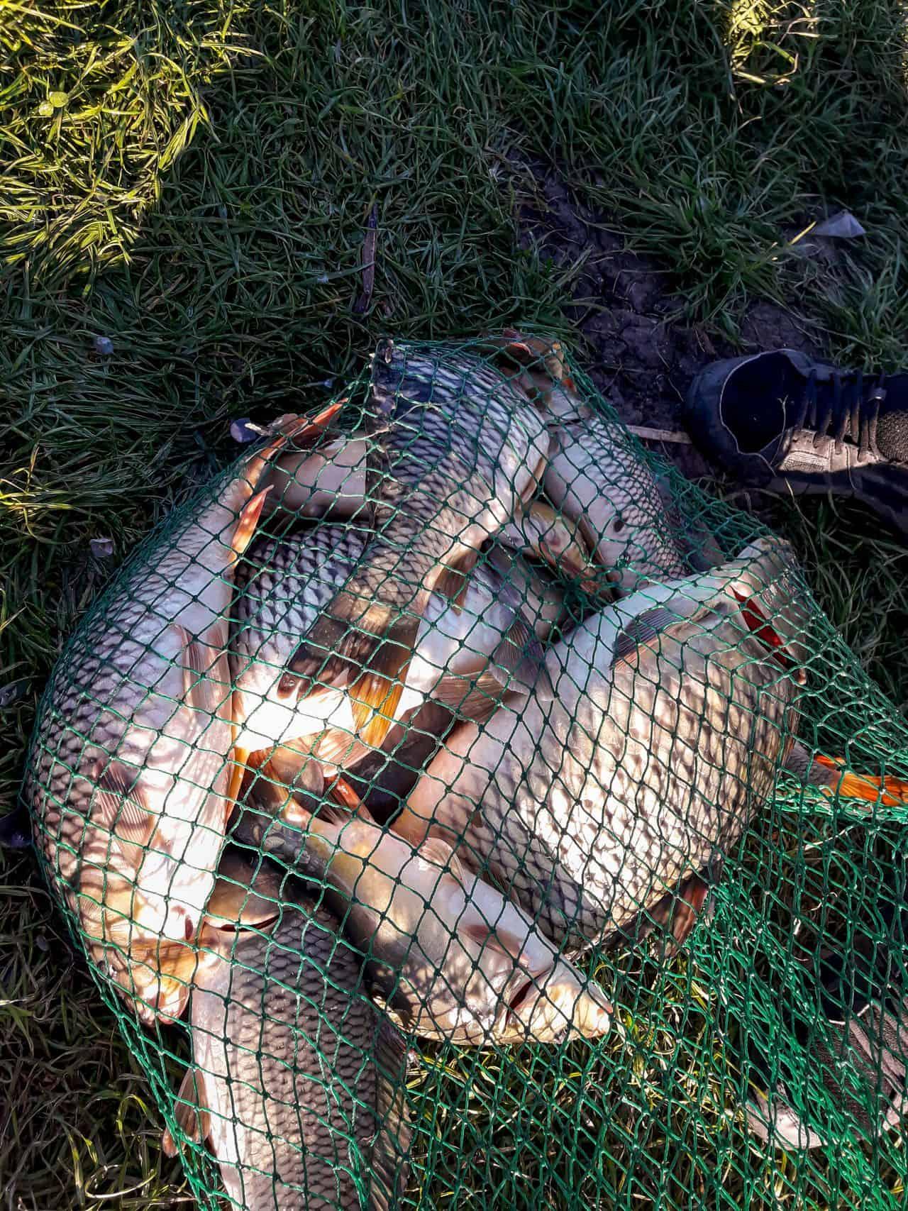 ANPA a eliminat propunerea ARBDD din ordinul de prohibiţie: pescarii rămân cu crapul în sajoc!