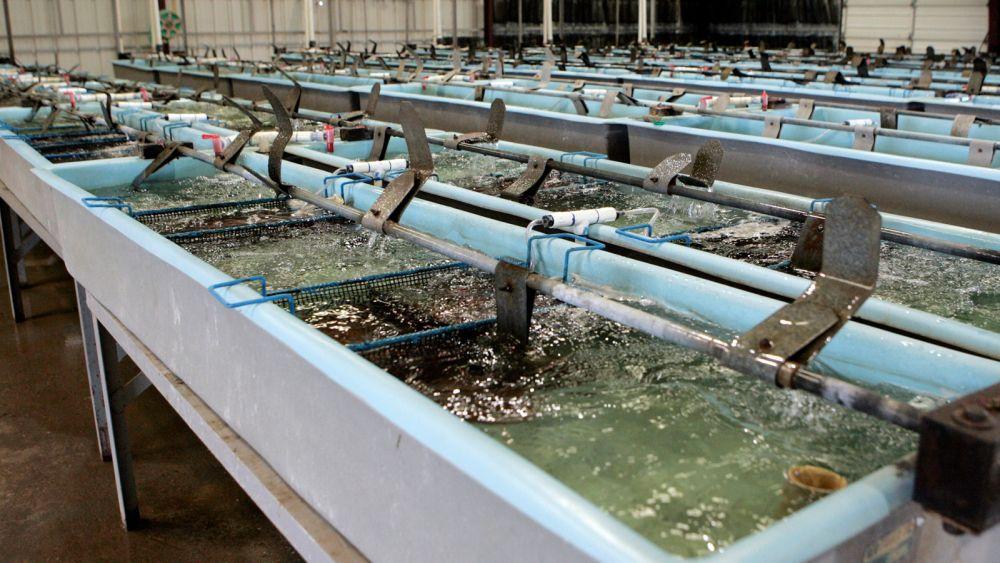 Puterea şi opoziţia au bătut palma în Consiliul Judeţean: concesionarii amenajărilor piscicole din Deltă vor primi facilităţi