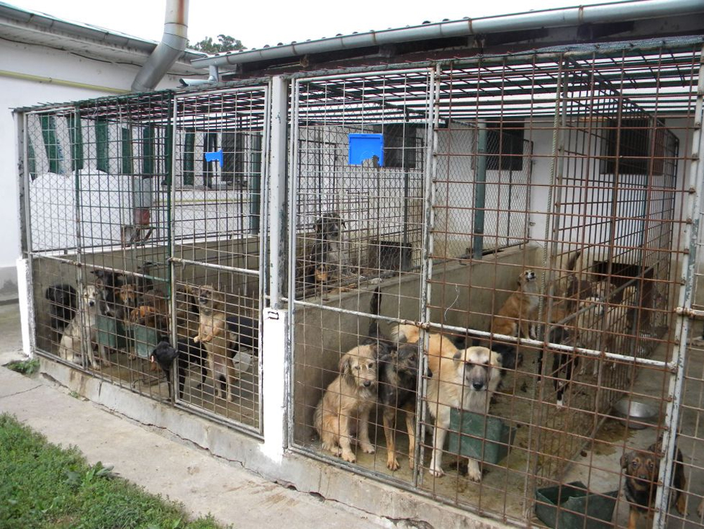 Animalele fără stăpân ne costă mai mult