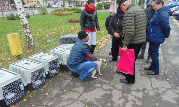 Un nou târg de câini în municipiu: 20 de patrupede aşteaptă să fie luate acasă