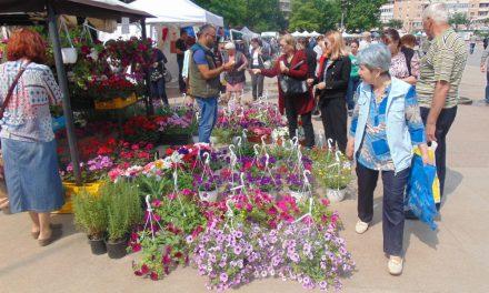 Invazie de flori în Piaţa Civică: tulceni, poftiţi la Expoflora!