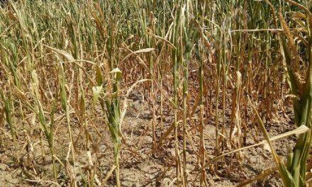 Anul acesta, fermierii tulceni au obţinut cele mai slabe producţii agricole din ţară