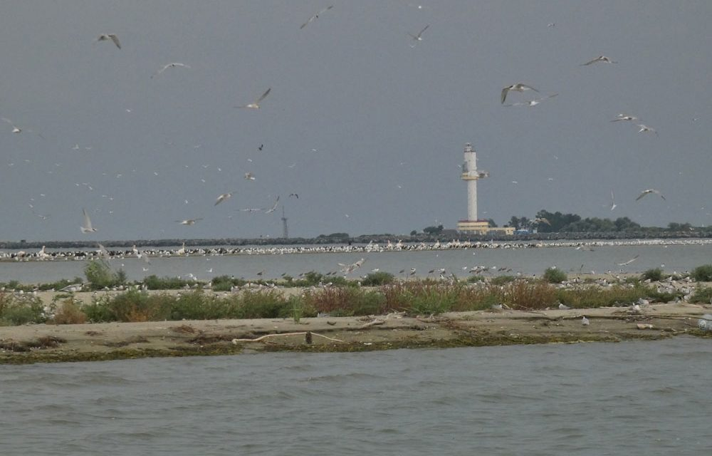 Cadavre de cormorani, chire de mare şi pescăruşi descoperite pe insula K, lângă Sulina