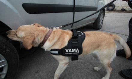 Câini pregătiţi la Tulcea vor adulmeca ţigările şi drogurile de contrabandă