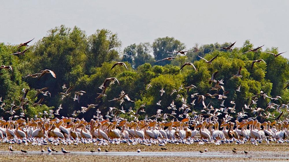 Conferinţă internaţională pe tema protejării păsărilor