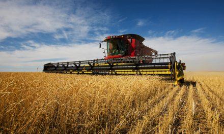 Top Firme 2019: Agricultura, cel mai profitabil domeniu din Tulcea