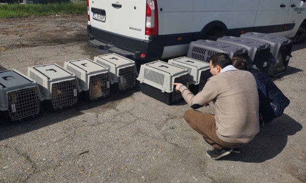 Un nou târg de adopţie câini în municipiu