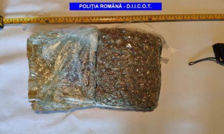 Trafic de droguri la Tulcea: 14 percheziţii la Jurilovca, 19 audiaţi, 5 arestaţi