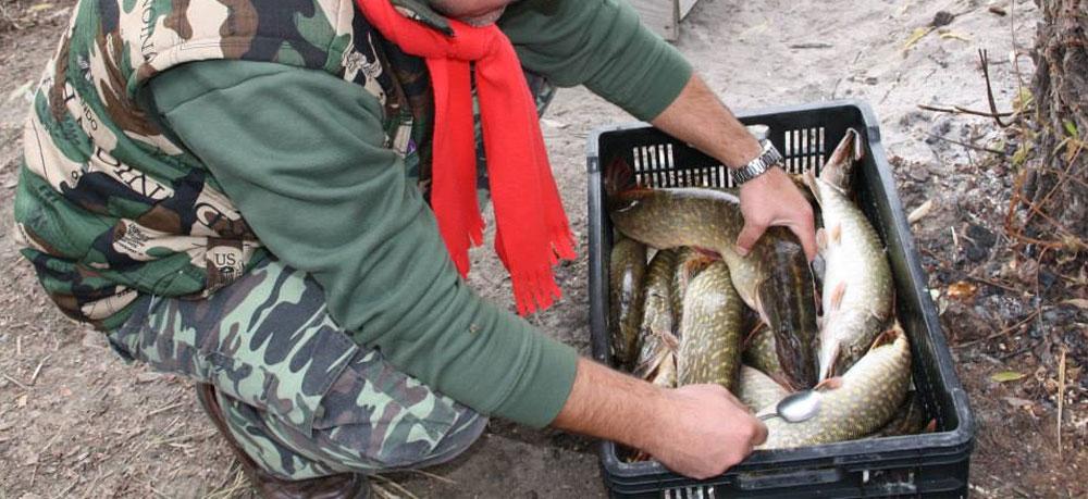 Fără ordin de prohibiţie! Pescarii comerciali şi sportivi au încă liber la ştiucă