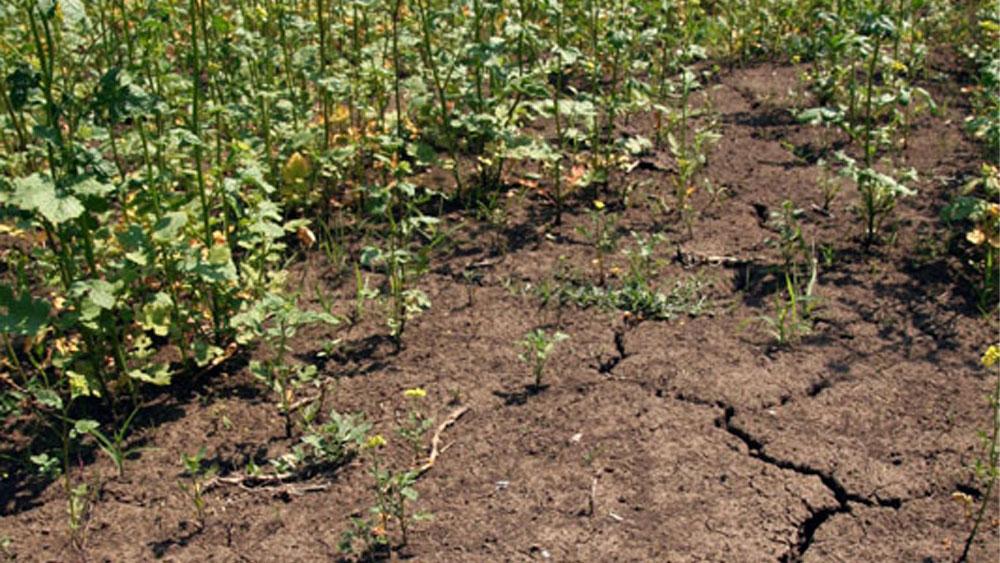 Fermierii tulceni vor fi despăgubiţi cu peste 200 milioane de lei pentru calamităţile produse de secetă