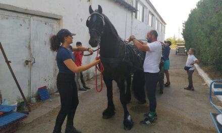 Concursul de echitaţie Working Equitation şi-a deschis porţile la Tulcea