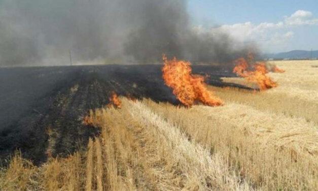 Doi fermieri tulceni, identificaţi de APIA că şi-au ars terenurile