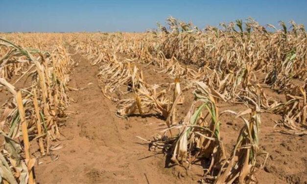 Peste 2500 de fermieri tulceni vor ajutor de stat pentru secetă