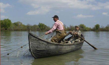 Pescarii din Sfântu Gheorghe solicită INCDDD informaţii cu privire la stadiul programelor de refacere a populaţiei de sturioni