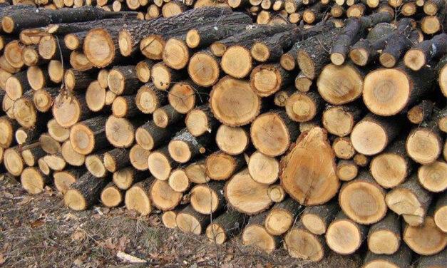 Direcţia Silvică scoate la vânzare circa 55.000 de metri cubi de lemn pentru populaţie