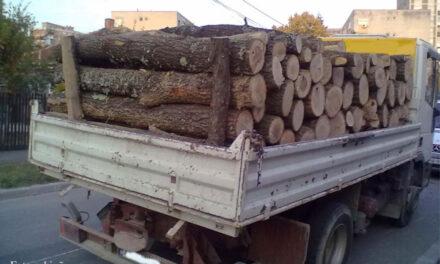 Şeful secţiei de întreţinere domeniu public, prins ducându-şi lemnele acasă cu camionul Primăriei Tulcea