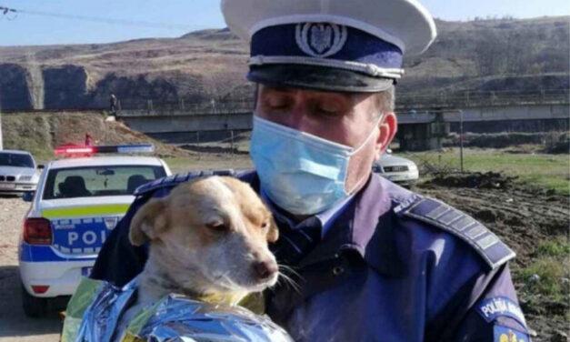 Concurenţă mare la Poliţia Animalelor Tulcea