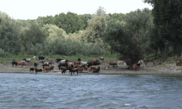 Terenurile şi animalele din Delta Dunării, în inventar