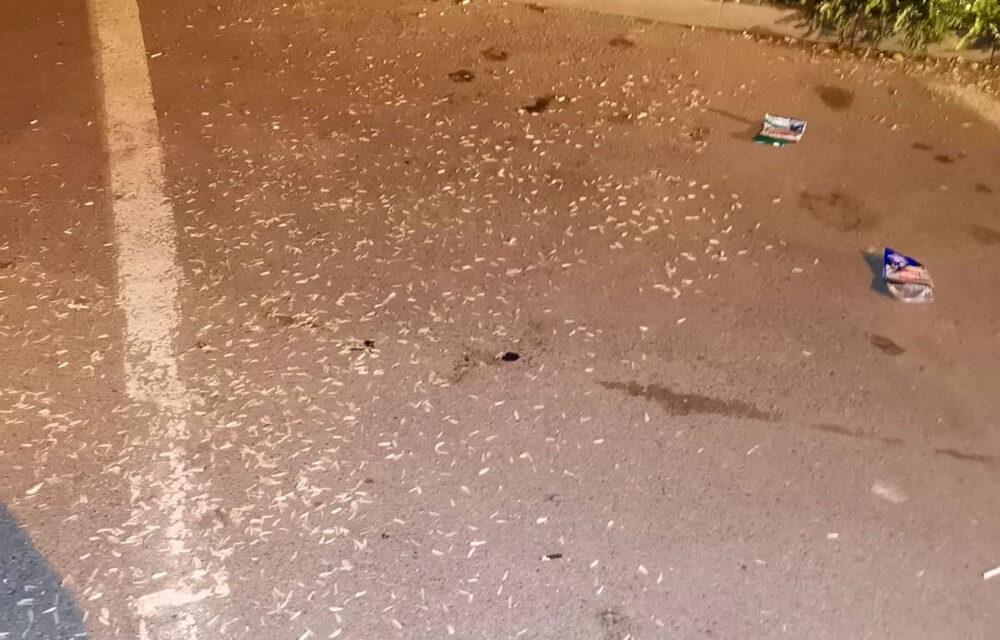 Mâncătorii de seminţe, puşi să-şi măture cojile aruncate pe jos