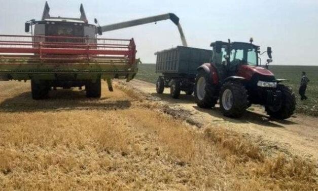 Fermierii au recoltat orzul: producţia şi preţul, mult mai bune decât anul trecut