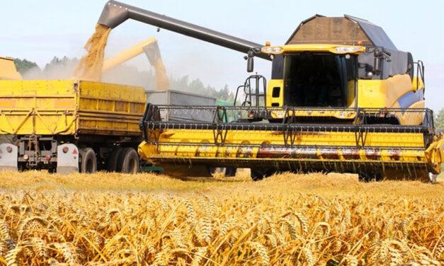 Agricultorii tulceni anunţă recolte mult mai bune faţă de anul trecut