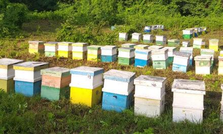 Producţia de miere, mai bună cu 40% faţă de anul trecut, la Tulcea