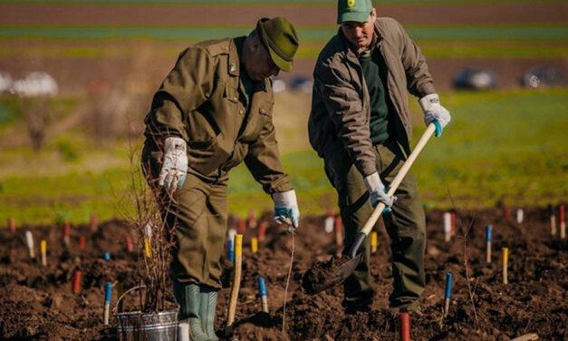 Silvicultorii tulceni continuă împăduririle: peste 380 de hectare vor fi regenerate toamna aceasta